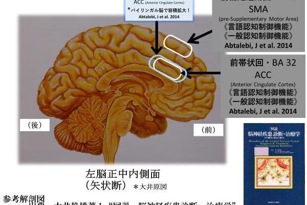 二言語使用により言語を統制する前体状皮質の機能が高まる