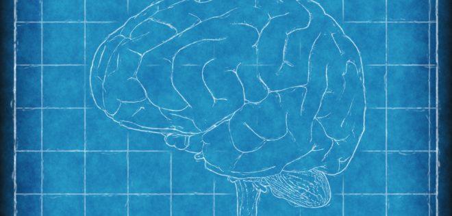 医学界でも急がれるバイリンガル研究〜脳腫瘍の摘出手術中に明らかになるバイリンガル脳〜