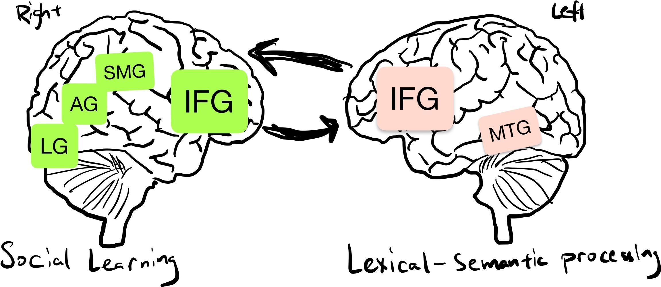 SL2アプローチに関与する脳領域を大まかに示した図